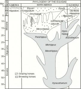 phylogeny-equidae