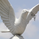 Dove of Peace in Togo