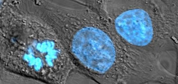 Cells on Acid