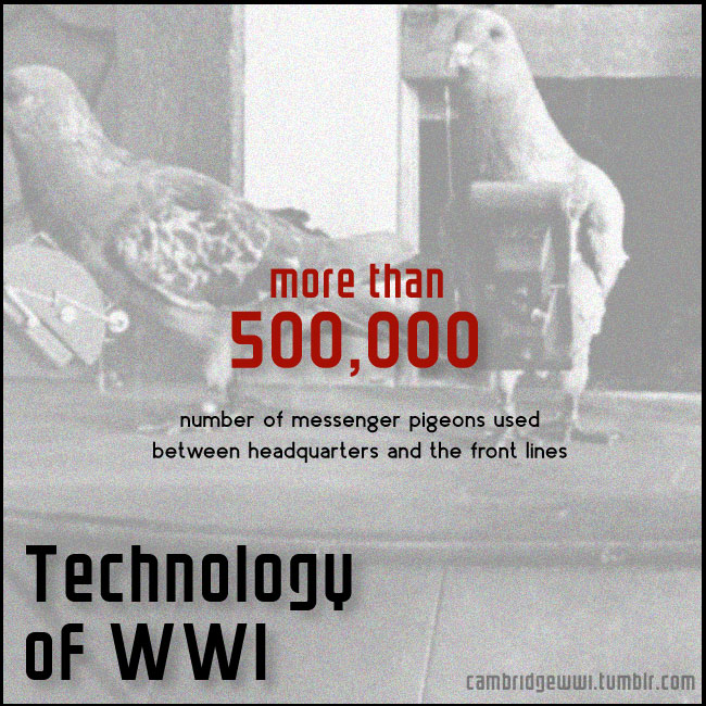 The front lines of WWI were home to more than 500,000 messenger pigeons