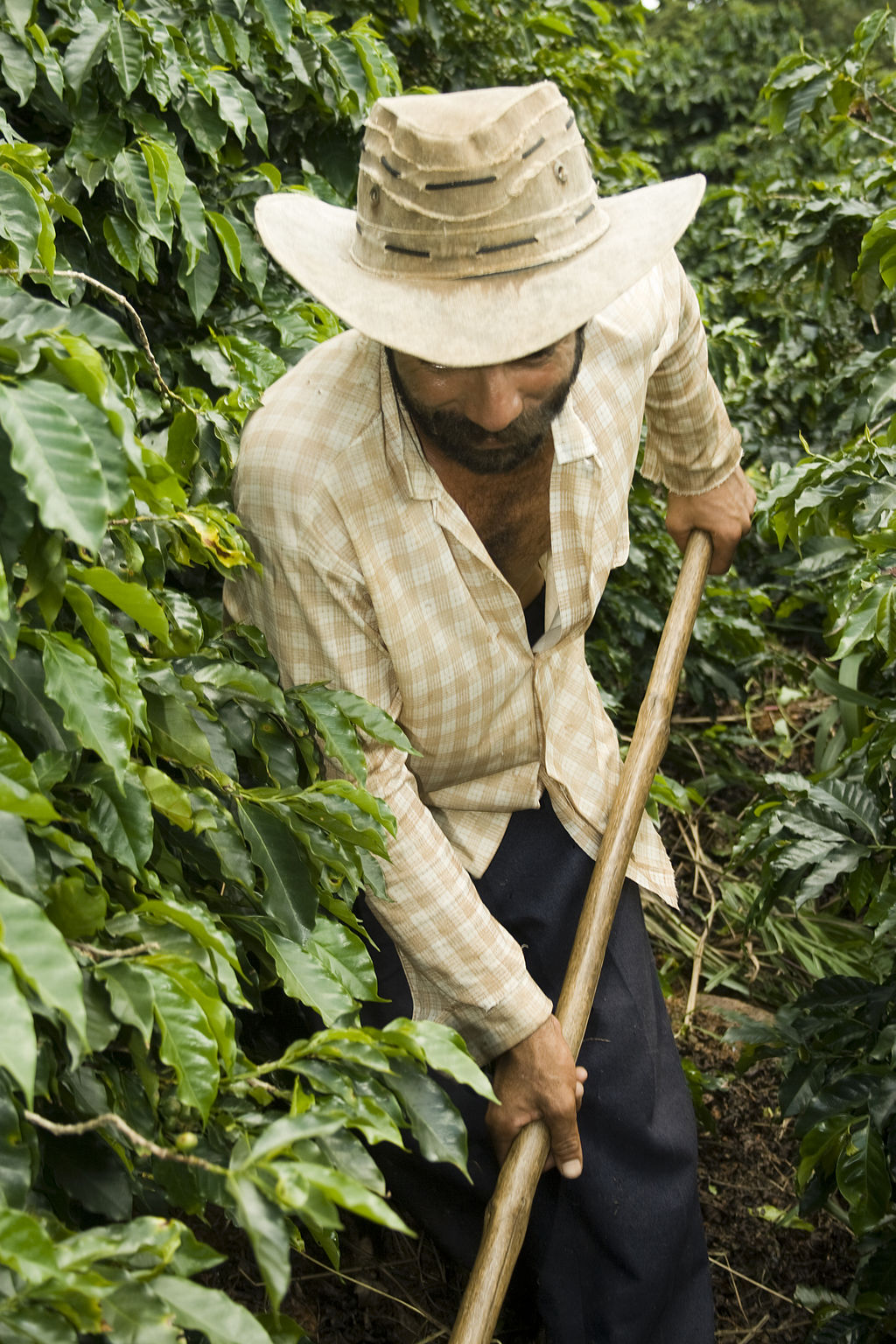 Coffee Farner