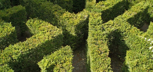 Hampton Court Maze. Photo: Amanda Slater via Creative Commons.