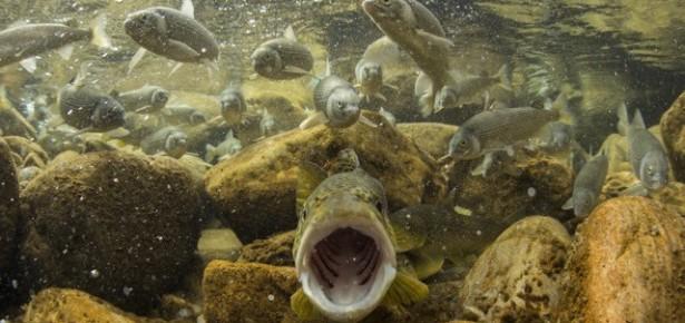 Photo courtesy of Freshwaters Illustrated http://www.freshwatersillustrated.org