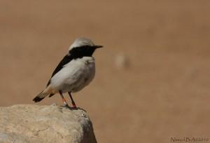 Photo taken by Nimrod Ben-Aharon