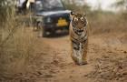 World Wildlife Day: Big Cats – predators under threat