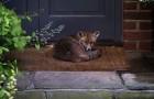Fox Relaxing Against Door In Yard