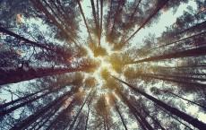 Forest shutterstock_360432311