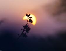 Courtesy of mouli choudari | Flickr