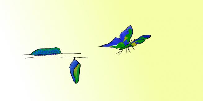 transformation image