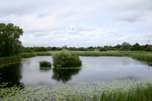 Woodwalton Fen (Photo courtesy of the author)