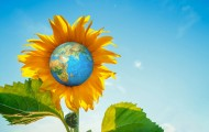 large-sunflower globeshutterstock_1159208677