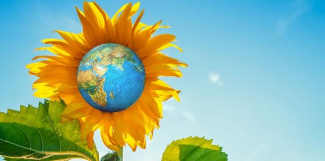 large-sunflower globeshutterstock_1159208677