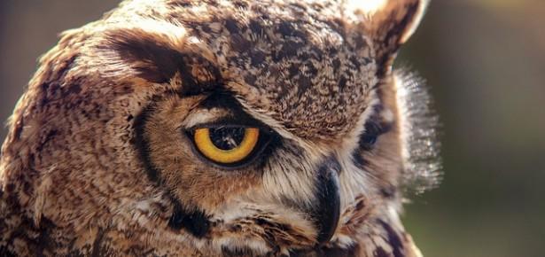 Animals, Animality and Literature blog post