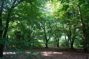 E. M. Forster's Piney Copse (Photo courtesy of the author)